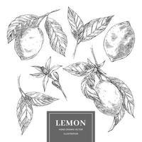 Sammlung von Zitronenillustration im Skizzenstil vektor