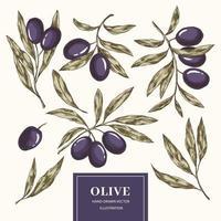 Olivenzweige gesetzt vektor