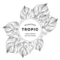 Rahmen mit Monstera-Blättern im Skizzenstil vektor