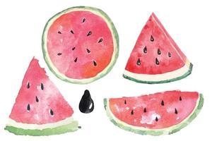 Aquarell Wassermelone gesetzt vektor