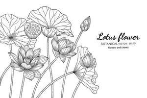 Lotusblume und Blatthand gezeichnete botanische Illustration mit Strichzeichnungen auf weißem Hintergrund. vektor