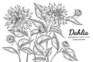 Dahlienblume und Blatthand gezeichnete botanische Illustration mit Strichzeichnungen auf weißem Hintergrund. vektor
