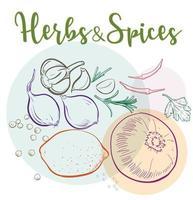 natürliche Kräuter und Gewürze für gesunde Mahlzeiten vektor