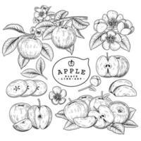 ganze Hälfte und Scheibe Apfel Hand gezeichnet Skizze Vektor dekorative Set