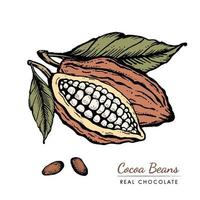 Hand gezeichnete Retro-Skizzenillustration der Kakaobohnen Vintage. Schokoladenkakaopulver Bohne, Ast, Nüsse, Samen und Blätter. Vektor für Logo, Etiketten, Webdesign, dekorative Elemente und mehr.
