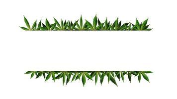 Ein rechteckiger Rahmen aus Hanfblättern umgibt einen weißen leeren Raum. Cannabisblattrahmenvorlage für die Cannabisindustrie vektor