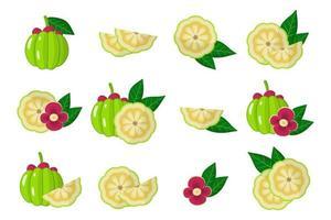 Satz Illustrationen mit exotischen Früchten, Blumen und Blättern lokalisiert auf einem weißen Hintergrund. vektor