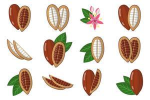 Satz Illustrationen mit exotischen Kakaofrüchten, -blumen und -blättern lokalisiert auf einem weißen Hintergrund. vektor