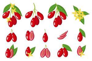 Satz Illustrationen mit exotischen Hartriegelfrüchten, Blumen und Blättern lokalisiert auf einem weißen Hintergrund. vektor