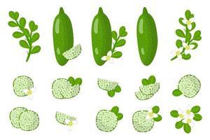 Satz Illustrationen mit exotischen Früchten, Blumen und Blättern der Fingerlimette lokalisiert auf einem weißen Hintergrund. vektor