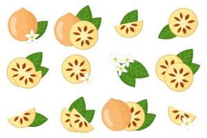 Satz Illustrationen mit bael exotischen Früchten, Blumen und Blättern lokalisiert auf einem weißen Hintergrund. vektor