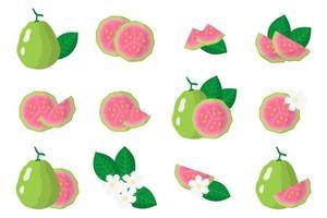Satz Illustrationen mit exotischen Guavenfrüchten, -blumen und -blättern lokalisiert auf einem weißen Hintergrund. vektor