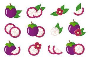 Satz Illustrationen mit exotischen Mangostanfrüchten, Blumen und Blättern lokalisiert auf einem weißen Hintergrund. vektor