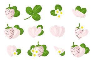 Satz Illustrationen mit exotischen Kiefernbeerfrüchten, Blumen und Blättern lokalisiert auf einem weißen Hintergrund. vektor