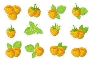 Satz Illustrationen mit exotischen gelben Himbeerfrüchten, Blumen und Blättern lokalisiert auf einem weißen Hintergrund. vektor
