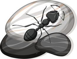 Draufsicht der schwarzen Ameise auf einem Stein auf weißem Hintergrund vektor