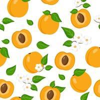 Nahtloses Muster der Vektorkarikatur mit exotischen Früchten, Blumen und Blättern des Prunus armeniaca oder der Aprikose auf weißem Hintergrund vektor