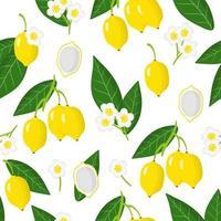 Nahtloses Muster der Vektorkarikatur mit exotischen Bacupari-Früchten, Blumen und Blättern auf weißem Hintergrund vektor