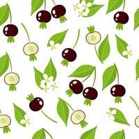 Nahtloses Muster der Vektorkarikatur mit exotischen Früchten, Blumen und Blättern der Grumichama-Kirsche auf weißem Hintergrund vektor