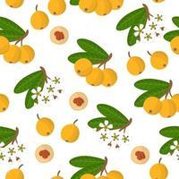 Nahtloses Muster der Vektorkarikatur mit exotischen Früchten, Blumen und Blättern von Eriobotrya japonica oder Mispel auf weißem Hintergrund vektor