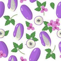 Nahtloses Muster der Vektorkarikatur mit exotischen Früchten, Blumen und Blättern von Akebia auf weißem Hintergrund vektor