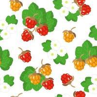 Nahtloses Muster der Vektorkarikatur mit exotischen Fruchtblumen und -blättern des Rubus Chamaemorus oder der Moltebeere auf weißem Hintergrund vektor