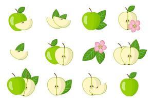 Satz Illustrationen mit exotischen Früchten, Blumen und Blättern des grünen Apfels lokalisiert auf einem weißen Hintergrund. vektor