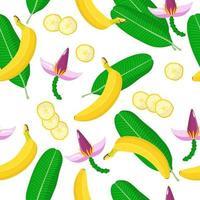 Nahtloses Muster der Vektorkarikatur mit exotischen Früchten, Blumen und Blättern der Banane auf weißem Hintergrund vektor