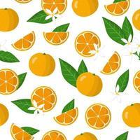 Nahtloses Muster der Vektorkarikatur mit exotischen Früchten, Blumen und Blättern von Calamondin oder Citrofortunella auf weißem Hintergrund vektor