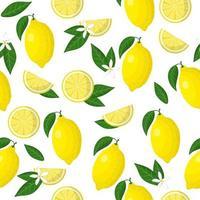 Nahtloses Muster der Vektorkarikatur mit exotischen Früchten, Blumen und Blättern von Zitruslimon oder Zitrone auf weißem Hintergrund vektor