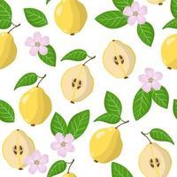 Nahtloses Muster der Vektorkarikatur mit Cydonia oblonga oder den exotischen Früchten, Blumen und Blättern der Quitte auf weißem Hintergrund vektor