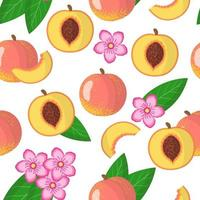 Nahtloses Muster der Vektorkarikatur mit exotischen Früchten, Blumen und Blättern des Prunus persica oder des Pfirsichs auf weißem Hintergrund vektor