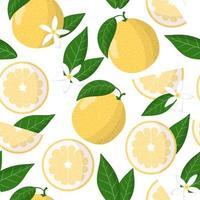 Nahtloses Muster der Vektorkarikatur mit exotischen Früchten, Blumen und Blättern der Zitrusfrucht-Süßigkeit auf weißem Hintergrund vektor