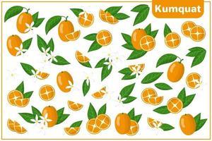 Satz von Vektorkarikaturillustrationen mit exotischen Kumquatfrüchten, -blumen und -blättern lokalisiert auf weißem Hintergrund vektor