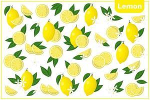 Satz Vektorkarikaturillustrationen mit exotischen Zitronenfrüchten, Blumen und Blättern lokalisiert auf weißem Hintergrund vektor