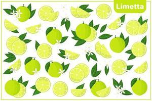 Satz Vektorkarikaturillustrationen mit exotischen Früchten, Blumen und Blättern der Limetta lokalisiert auf weißem Hintergrund vektor