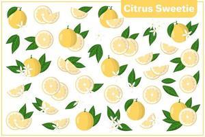 Satz Vektorkarikaturillustrationen mit exotischen Früchten, Blumen und Blättern der Zitrusfrucht-Süßigkeit lokalisiert auf weißem Hintergrund vektor