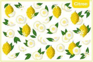 Satz von Vektorkarikaturillustrationen mit exotischen Zitronenfrüchten, Blumen und Blättern lokalisiert auf weißem Hintergrund vektor