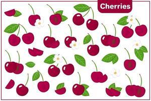 Satz Vektorkarikaturillustrationen mit Kirschen exotischen Früchten, Blumen und Blättern lokalisiert auf weißem Hintergrund vektor