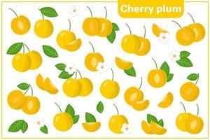 Satz Vektorkarikaturillustrationen mit exotischen Kirschpflaumenfrüchten, Blumen und Blättern lokalisiert auf weißem Hintergrund vektor