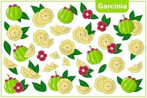 Satz Vektorkarikaturillustrationen mit exotischen Früchten, Blumen und Blättern der Garcinia lokalisiert auf weißem Hintergrund vektor