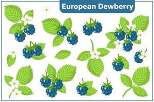 Satz Vektorkarikaturillustrationen mit exotischen europäischen Brombeerfrüchten lokalisiert auf weißem Hintergrund vektor