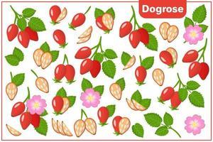 Satz Vektorkarikaturillustrationen mit exotischen Früchten, Blumen und Blättern der Dogrose lokalisiert auf weißem Hintergrund vektor