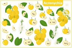 Satz von Vektorkarikaturillustrationen mit exotischen Früchten, Blumen und Blättern der Akronychie lokalisiert auf weißem Hintergrund vektor