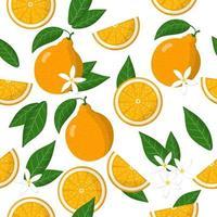 Nahtloses Muster der Vektorkarikatur mit exotischen Früchten, Blumen und Blättern des Zitrus-Tangelos oder der Honigglocken auf weißem Hintergrund vektor
