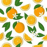 Vektor-Karikatur nahtloses Muster mit Zitrus sinensis oder orange exotischen Früchten, Blumen und Blättern auf weißem Hintergrund vektor