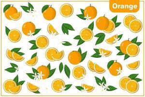 Satz Vektorkarikaturillustrationen mit orange exotischen Früchten, Blumen und Blättern lokalisiert auf weißem Hintergrund vektor