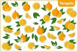 Satz Vektorkarikaturillustrationen mit exotischen Tangelofrüchten, -blumen und -blättern lokalisiert auf weißem Hintergrund vektor