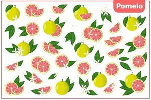 Satz Vektorkarikaturillustrationen mit exotischen Pampelmusenfrüchten, -blumen und -blättern lokalisiert auf weißem Hintergrund vektor