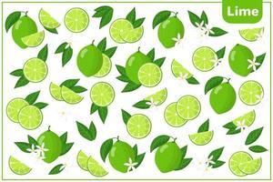 Satz von Vektorkarikaturillustrationen mit exotischen Früchten, Blumen und Blättern der Limette lokalisiert auf weißem Hintergrund vektor